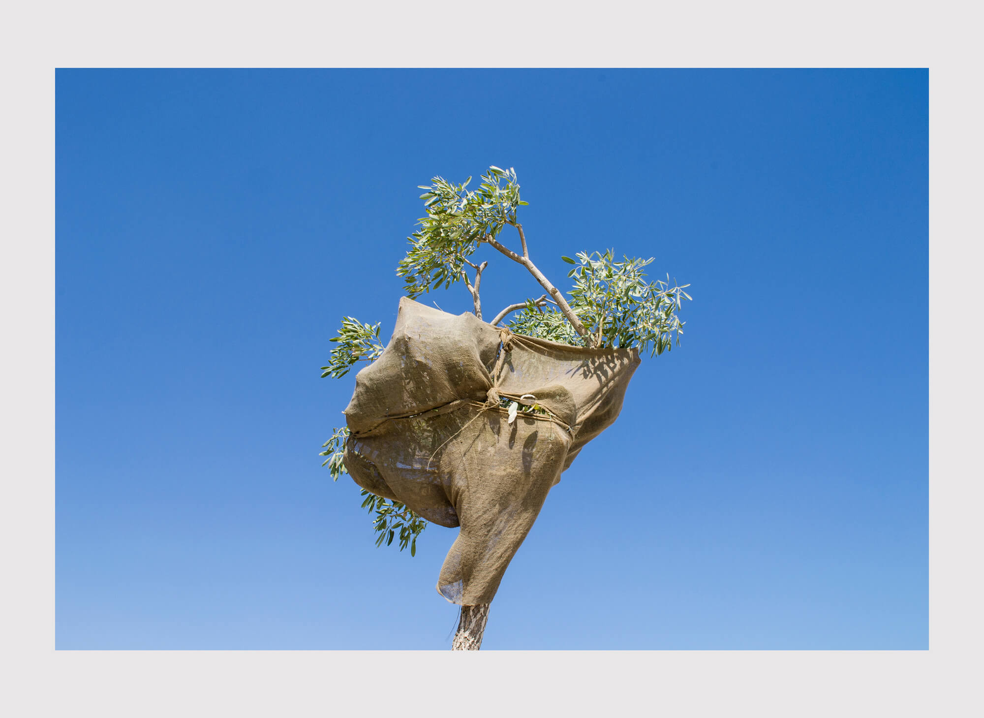 Ethan Beswick Mirari tree in Dubai photography the south west collective