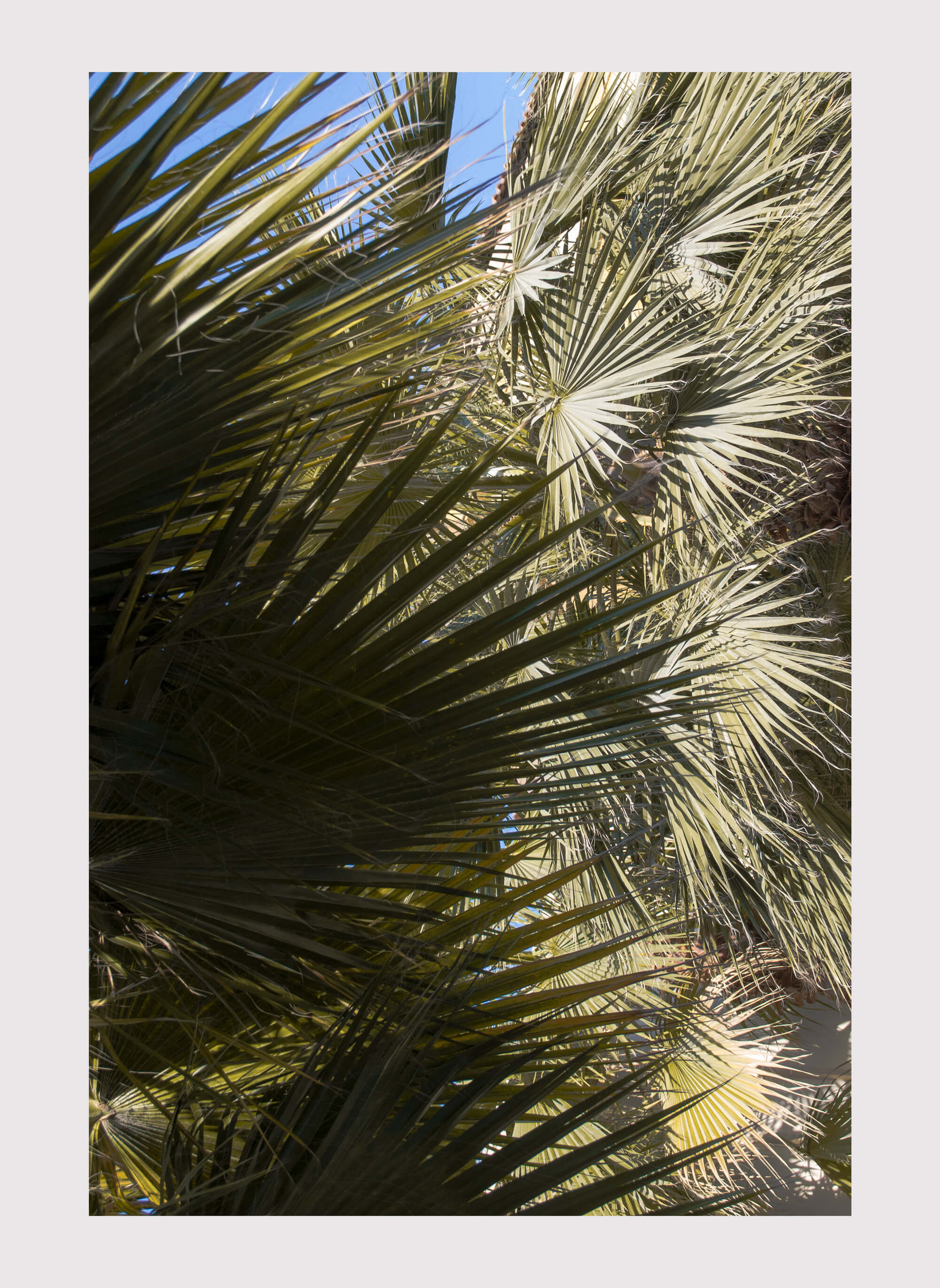 Ethan Beswick Mirari palm trees in Dubai photography the south west collective