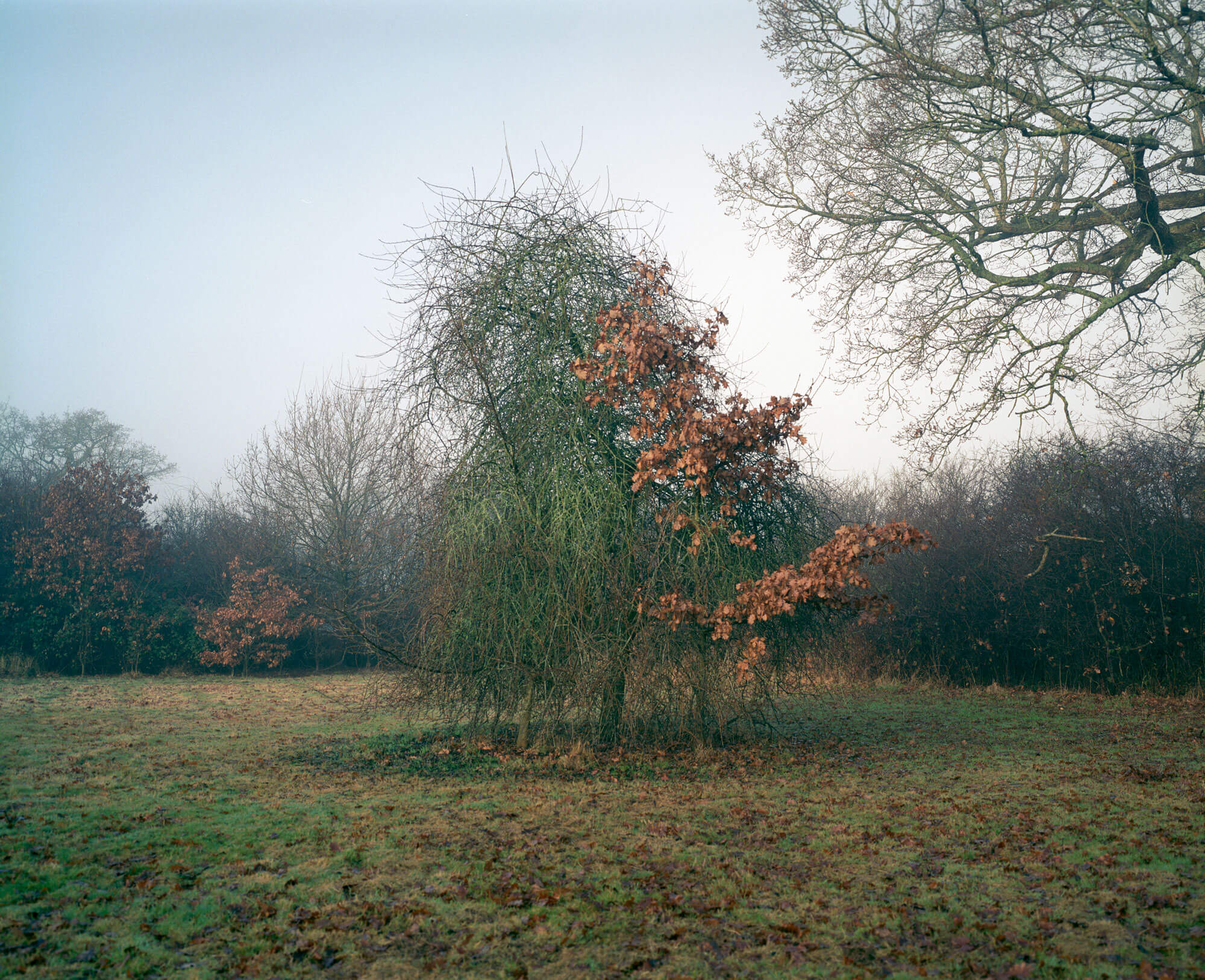 Will McCleland Out of Step Photography documentary photograph story kodak portra 120 The South West Collective photo