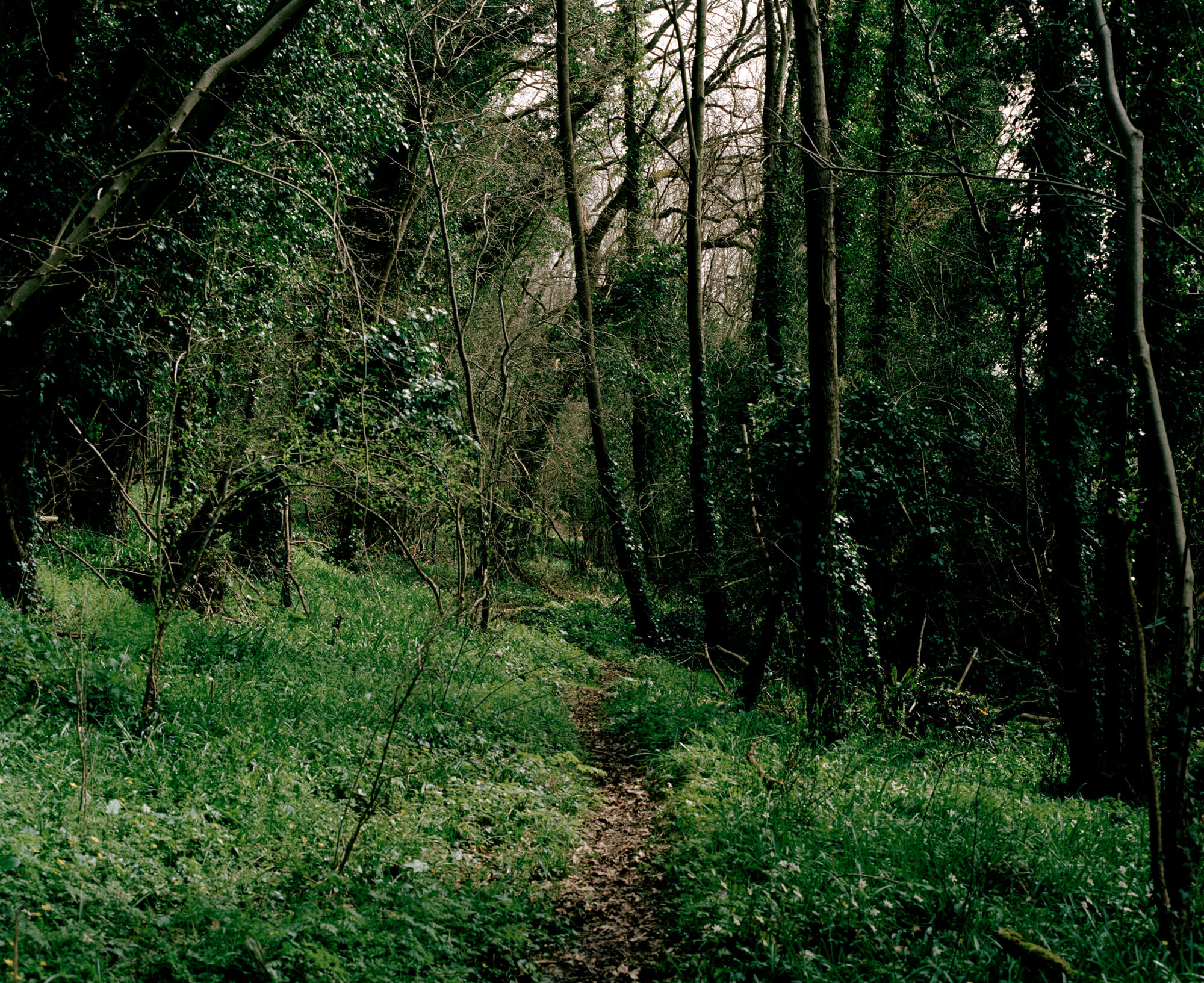 dark path in the woodland with green and black background by Ella cousins