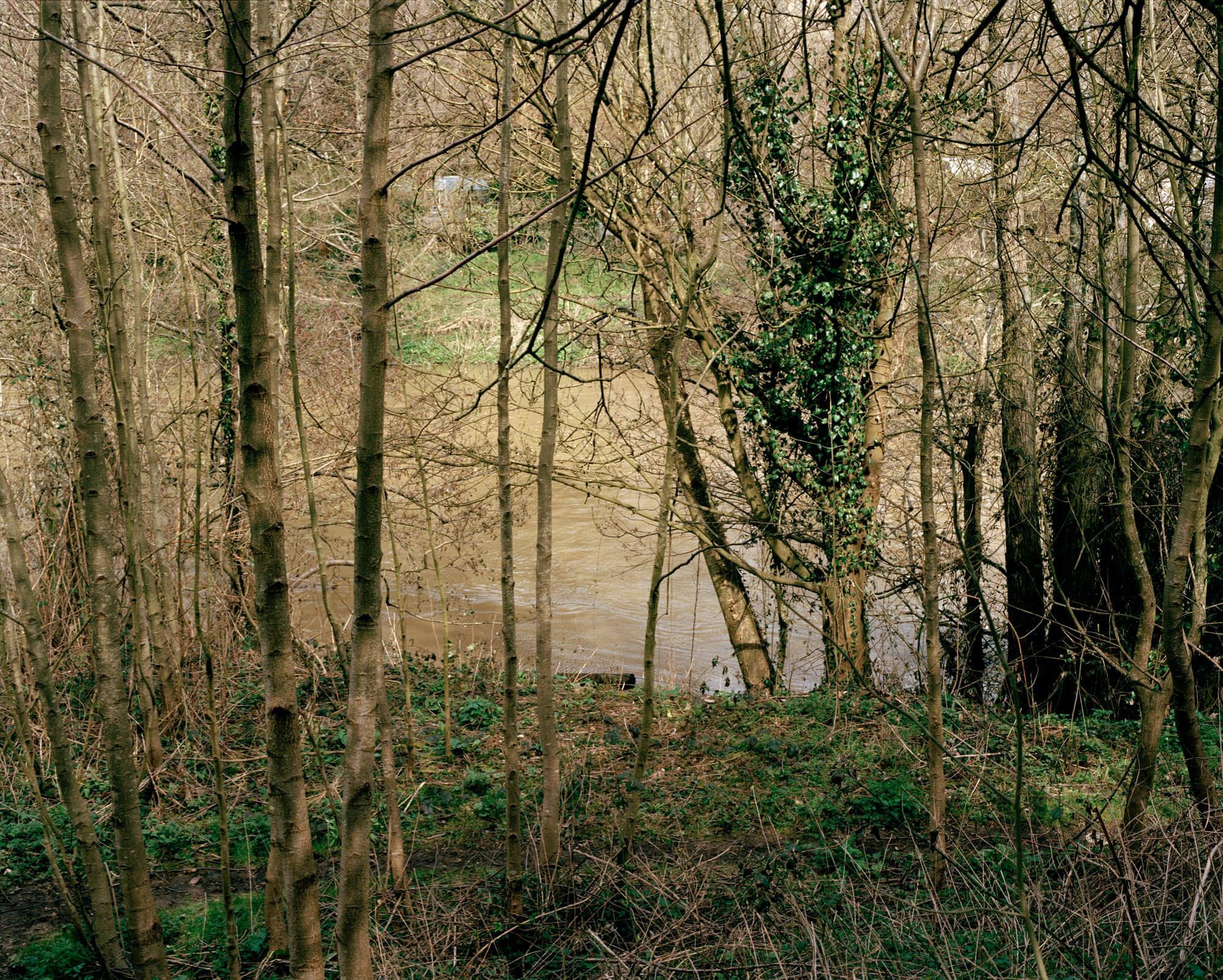 sunlight shining onto trees on a river and woodland on green background