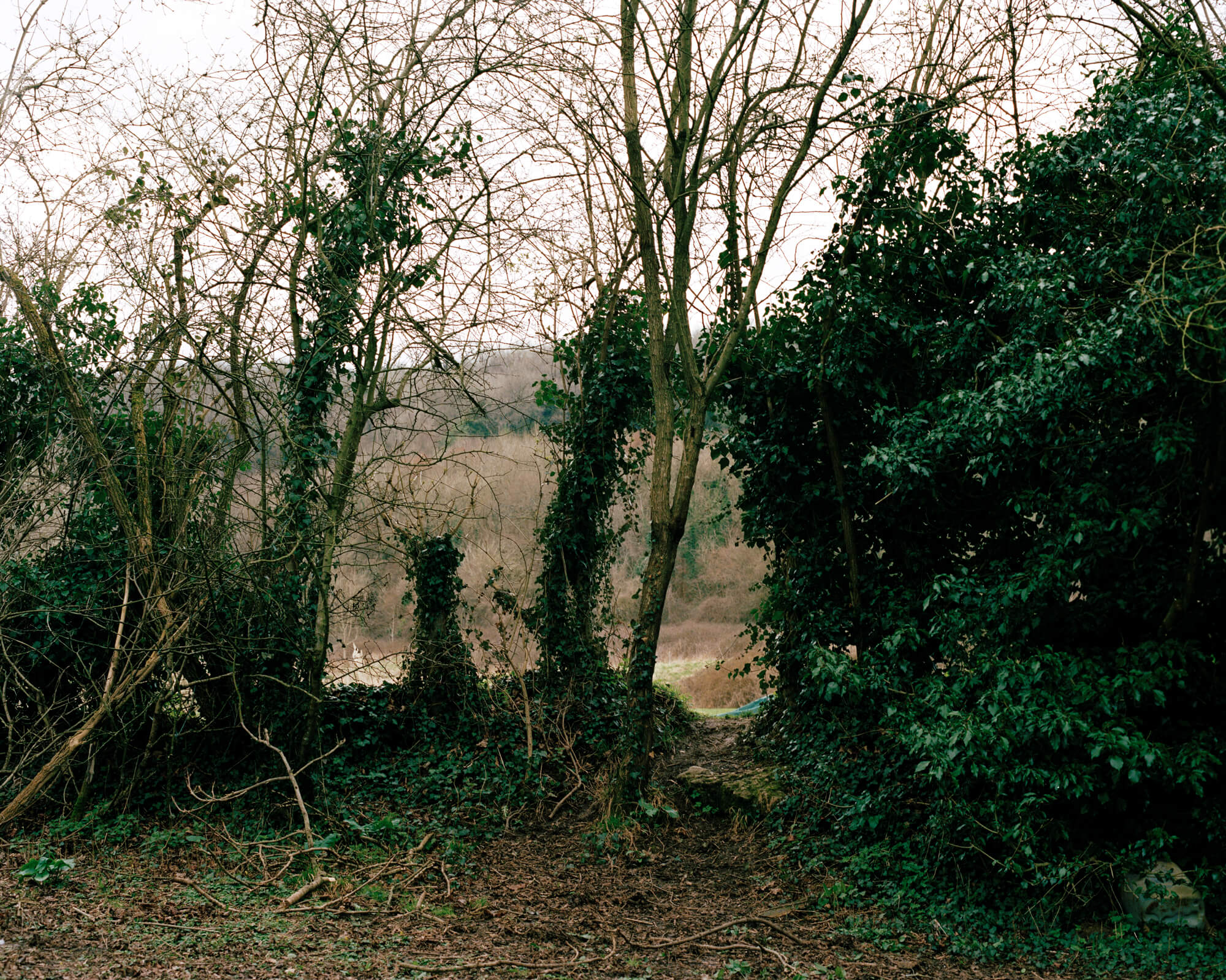green trees in the woodland next to collapsed tree