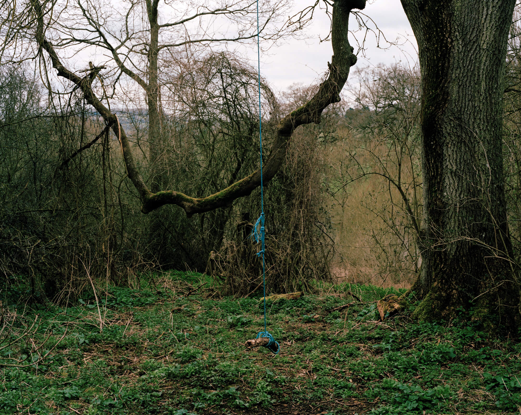 portra 400 green trees and tree swing in woodland Ella cousins