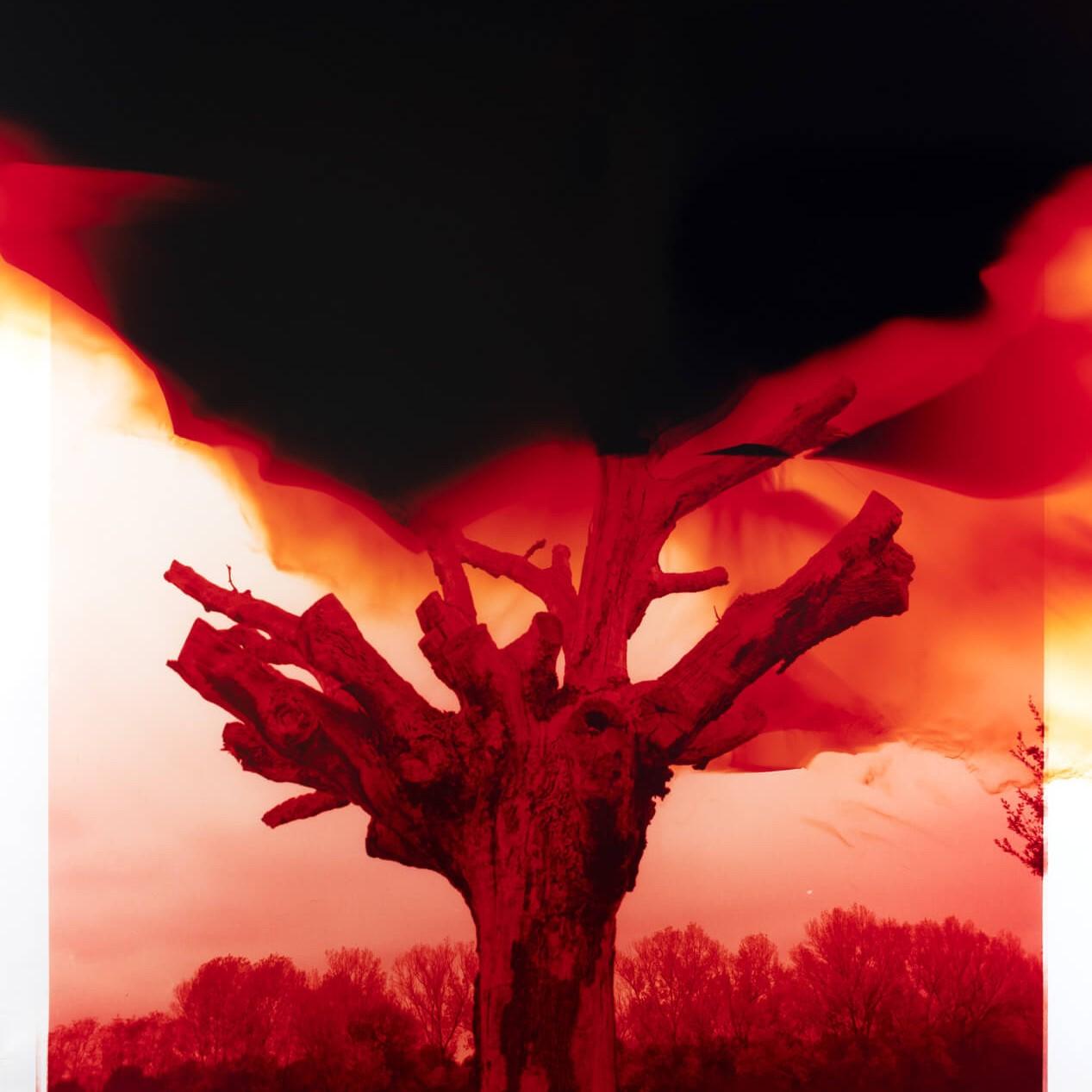 red tree dark room print fading away