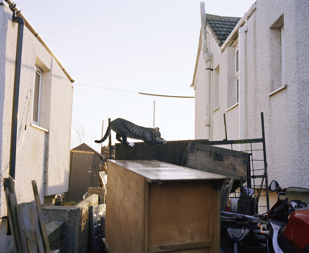 Sandra Mickiewicz Happy Club tabby cat on fence in jaywick