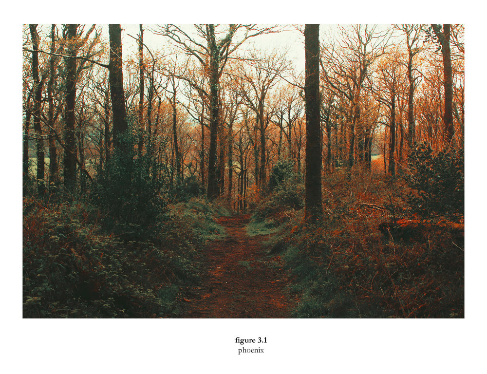 Amy Louise Curtis- Elementum woodland fire