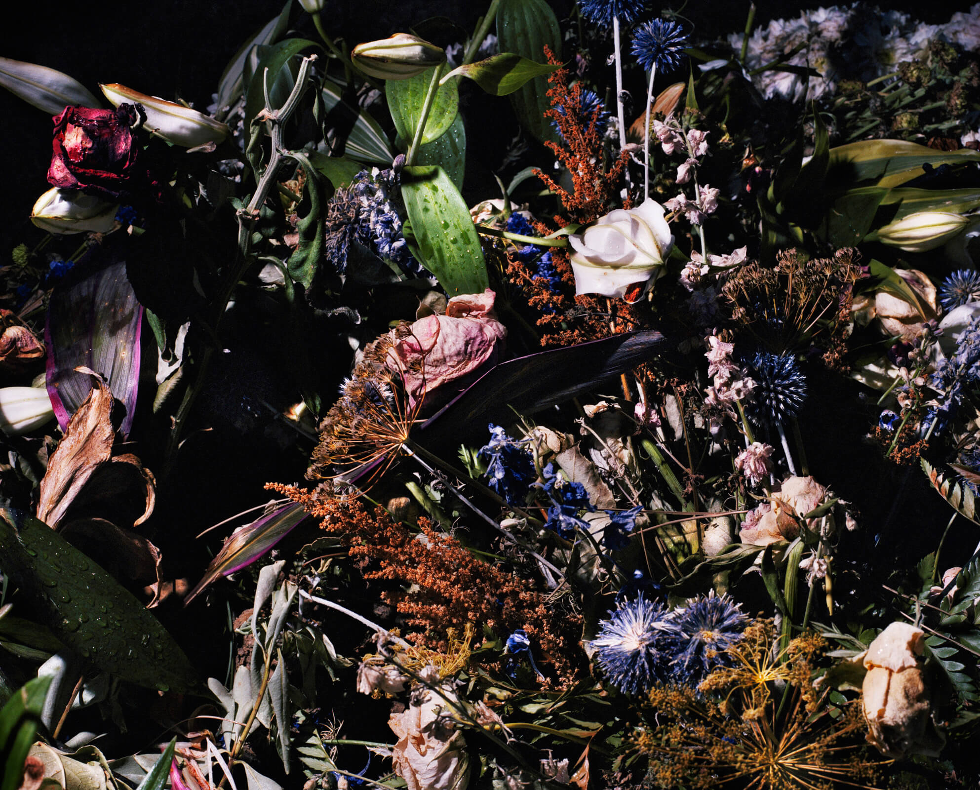 Piotr Karpinski the south west collective of photography dead flowers