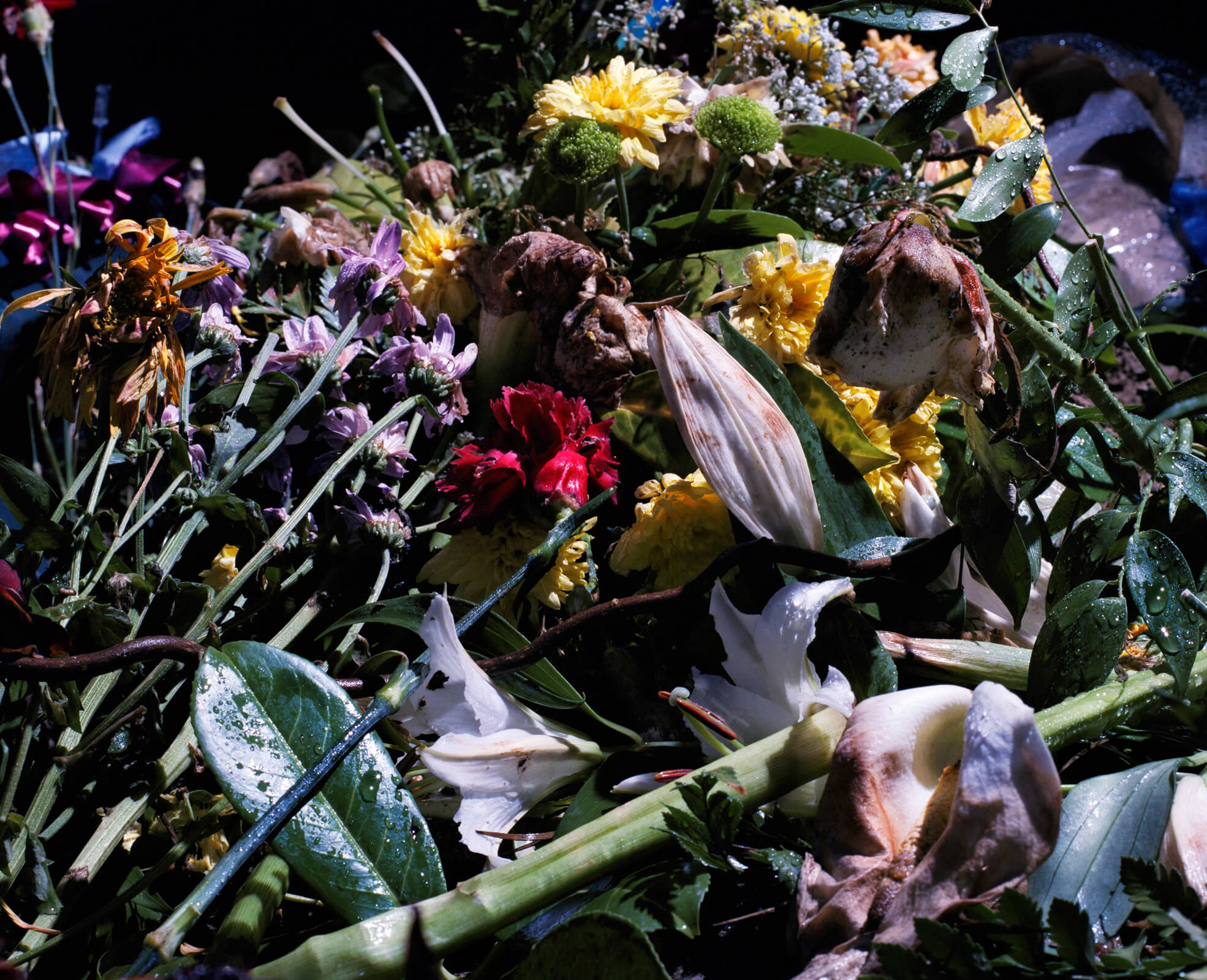 Piotr Karpinski the south west collective of photography flowers at a graveyard
