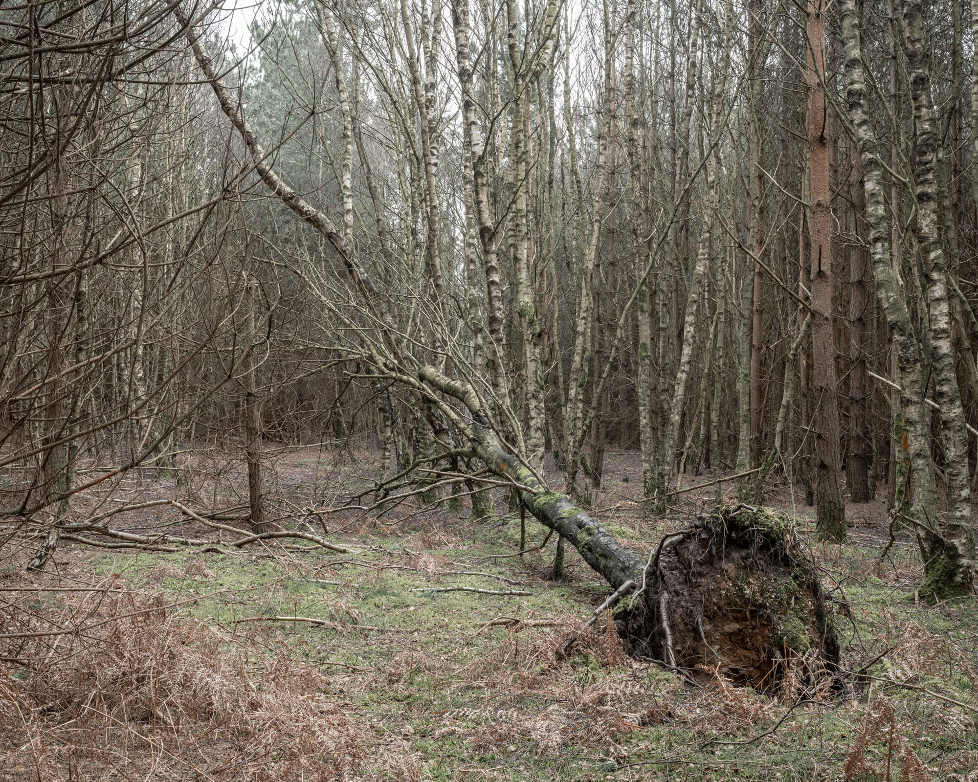 Samuel Fradley a handshake with a martian the south west collective of photography rendlesham forest suffolk fallen tree