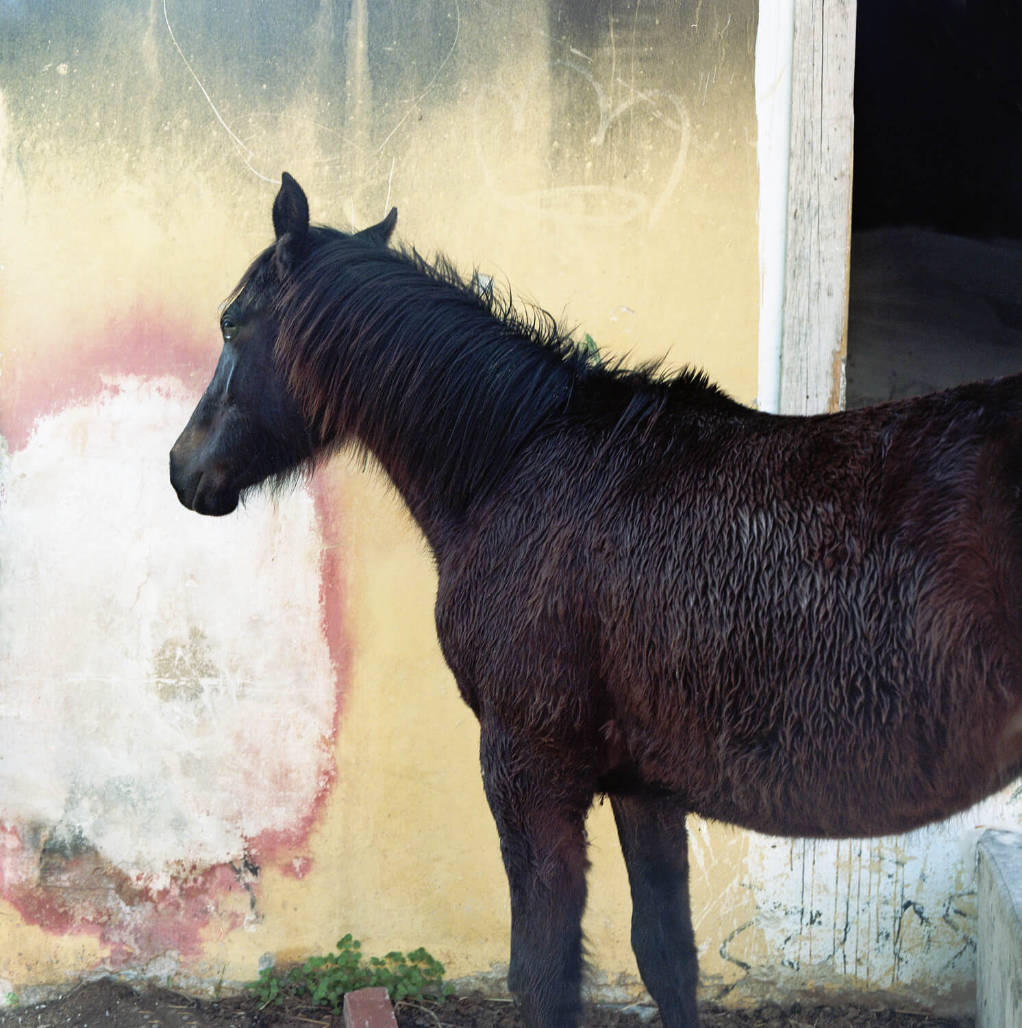 Ioanna Sakeelaraki - Everything I Remember Forgetfully the south west collective of photography black horse in a field