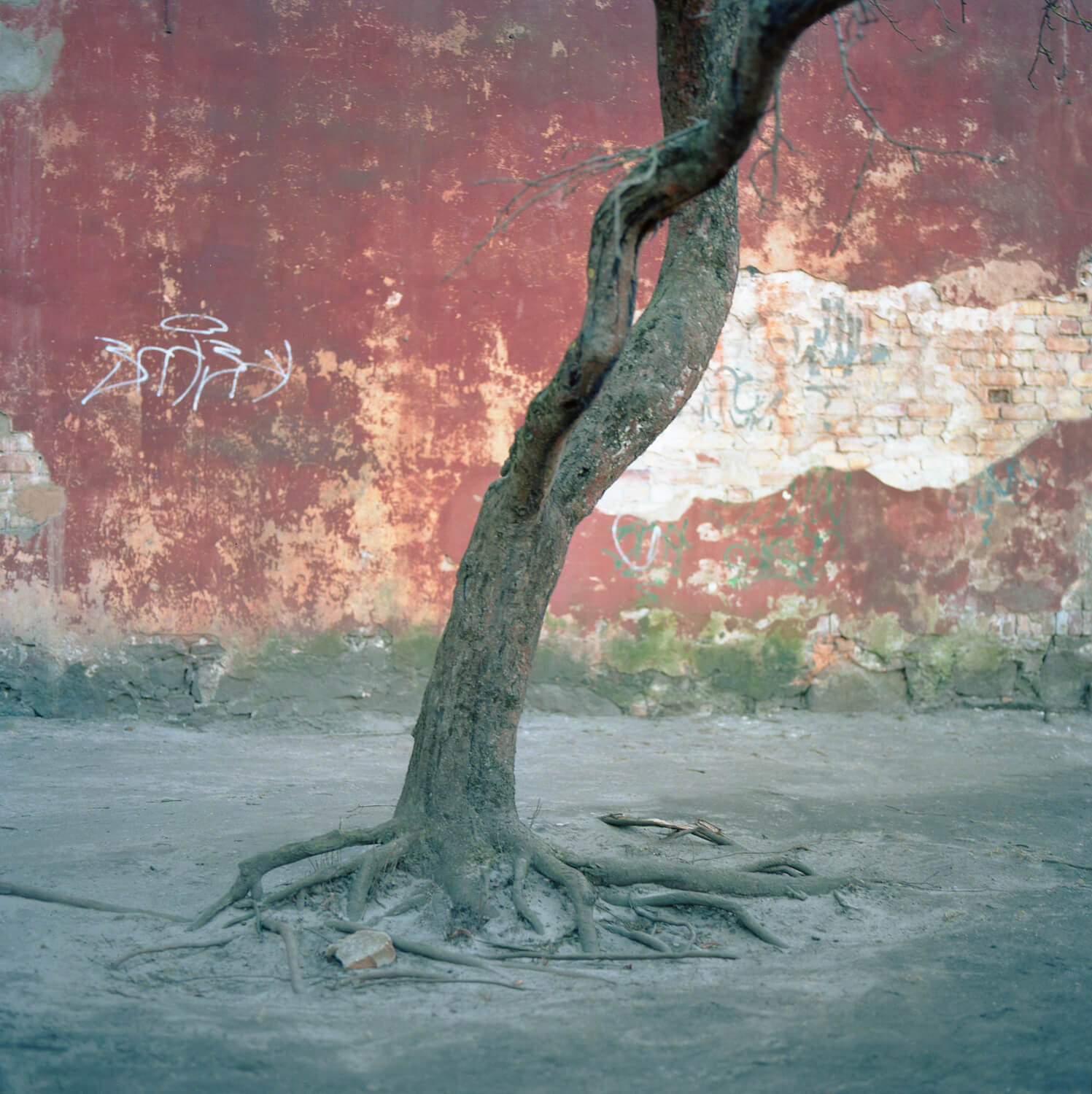 Ioanna Sakeelaraki - Everything I Remember Forgetfully the south west collective of photography tree coming out of a hole in the ground
