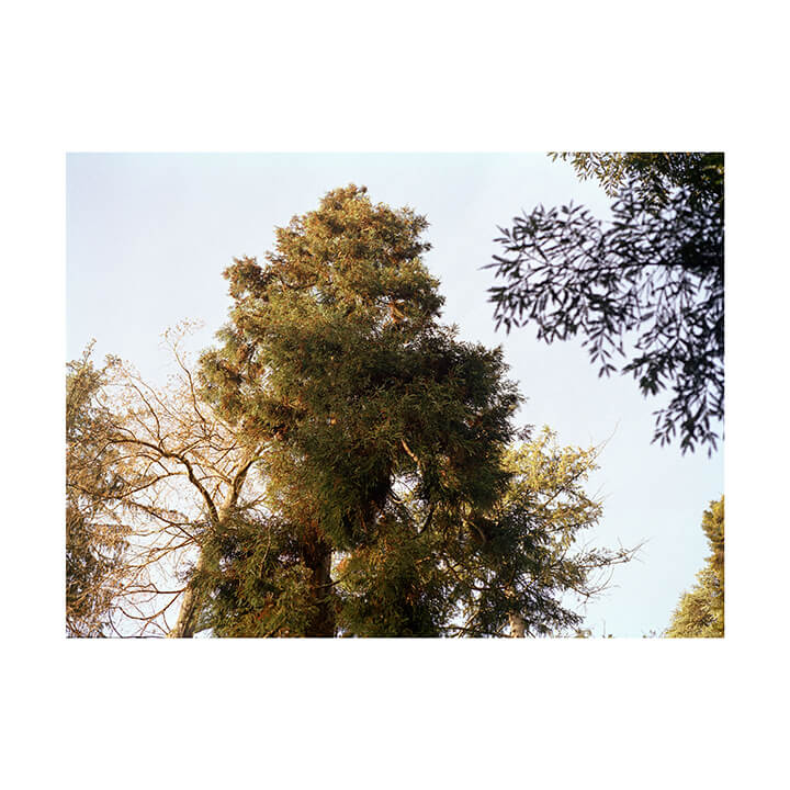 Isobel Colnaghi the south west collective of photography picture of tree