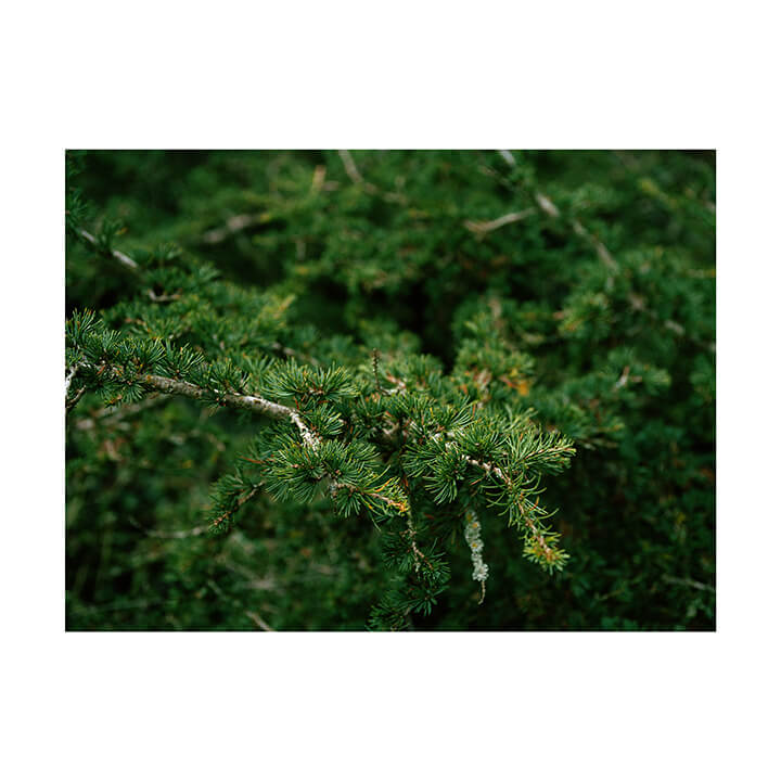 Isobel Colnaghi the south west collective of photography picture of trees