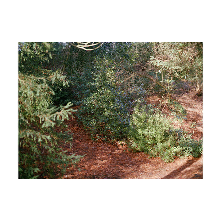 Isobel Colnaghi the south west collective of photography picture of woodland