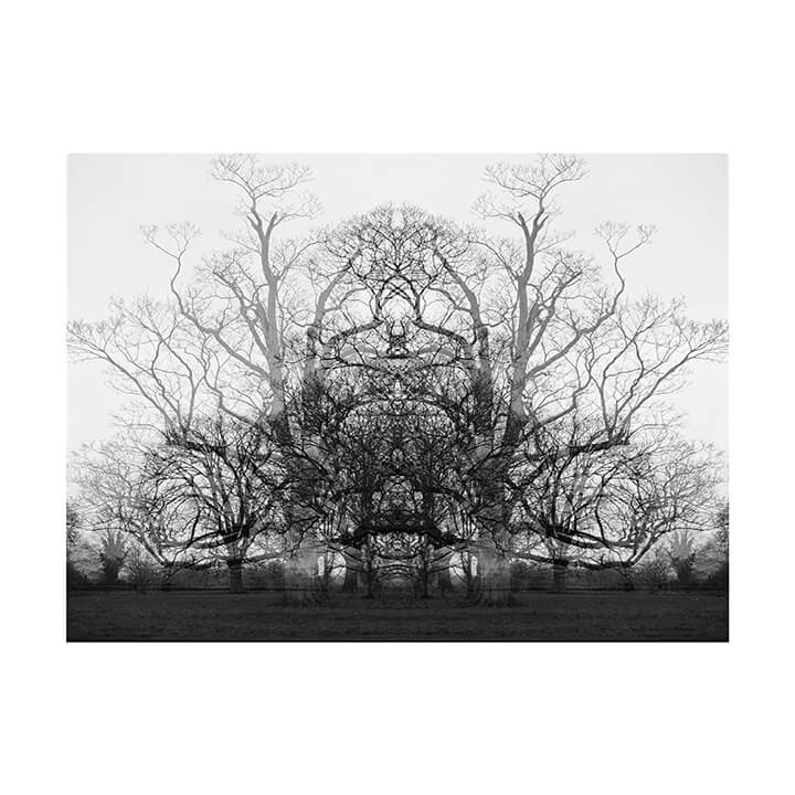 Isobel Colnaghi the south west collective of photography black and white picture of tree