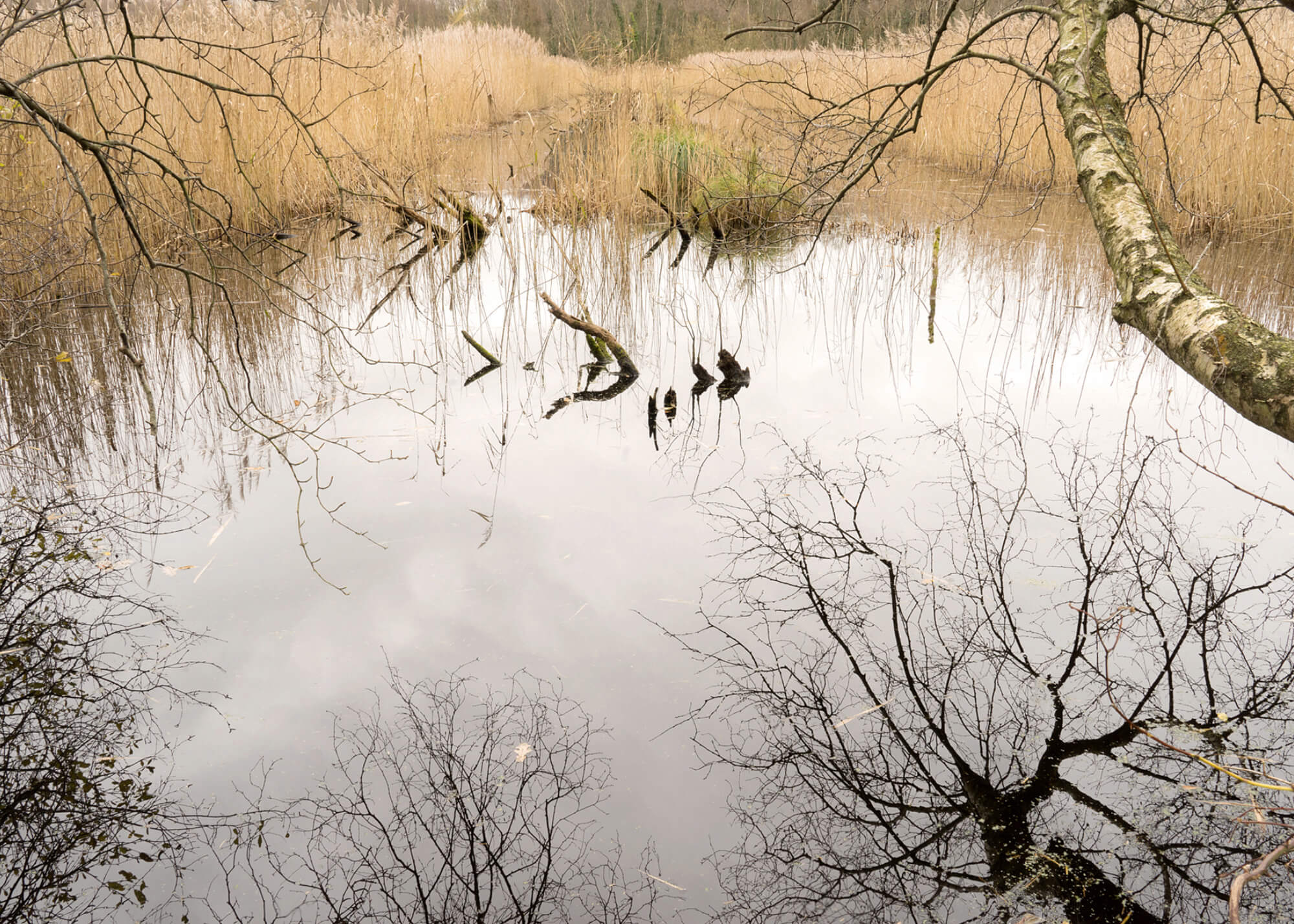 Amanda Harman fluid landscape picture of lake the south west collective of photography