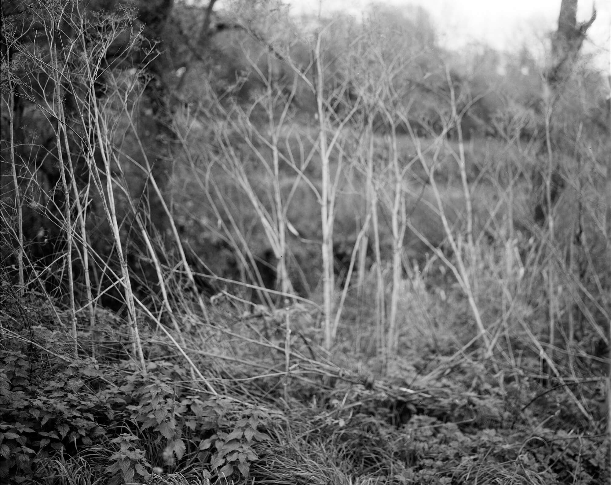 Abbie platt landscape the south west collective of photography black and white affair