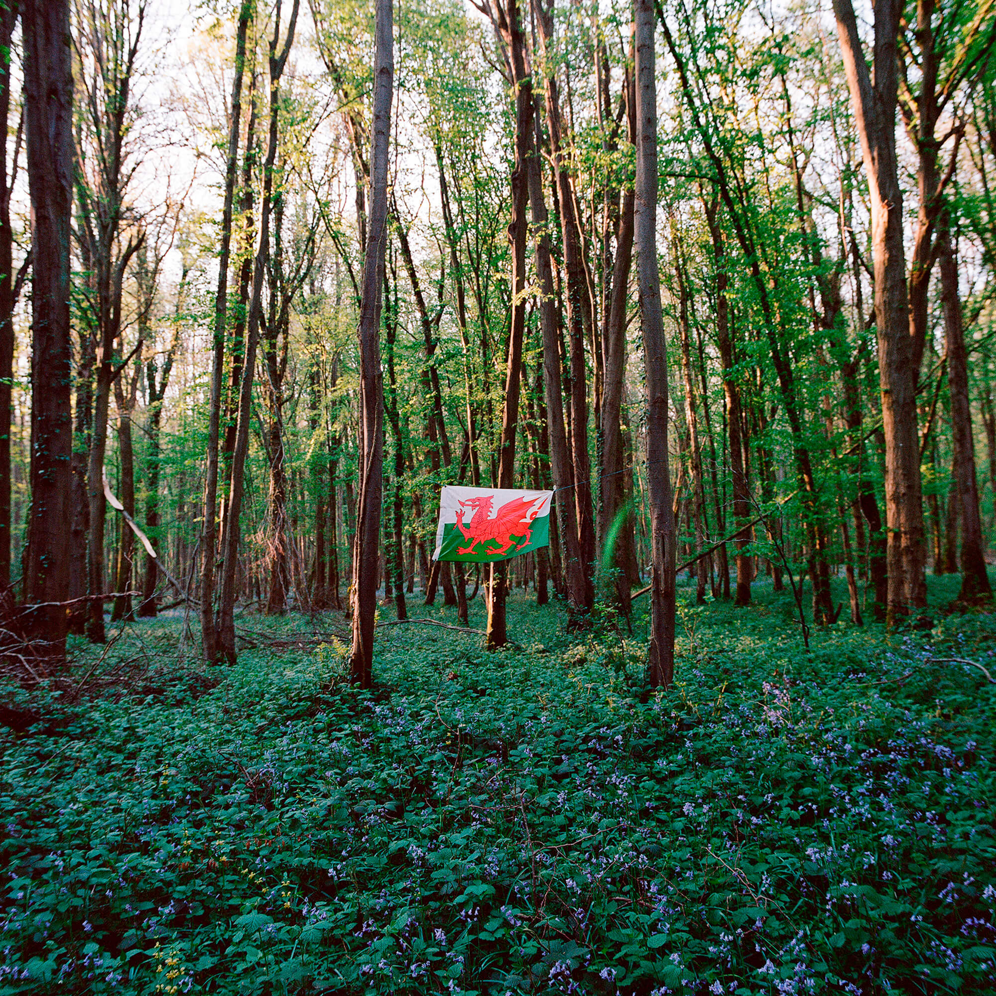 Luke Watson the south west collective of photgraphy ltd welsh flag hanging in woodland