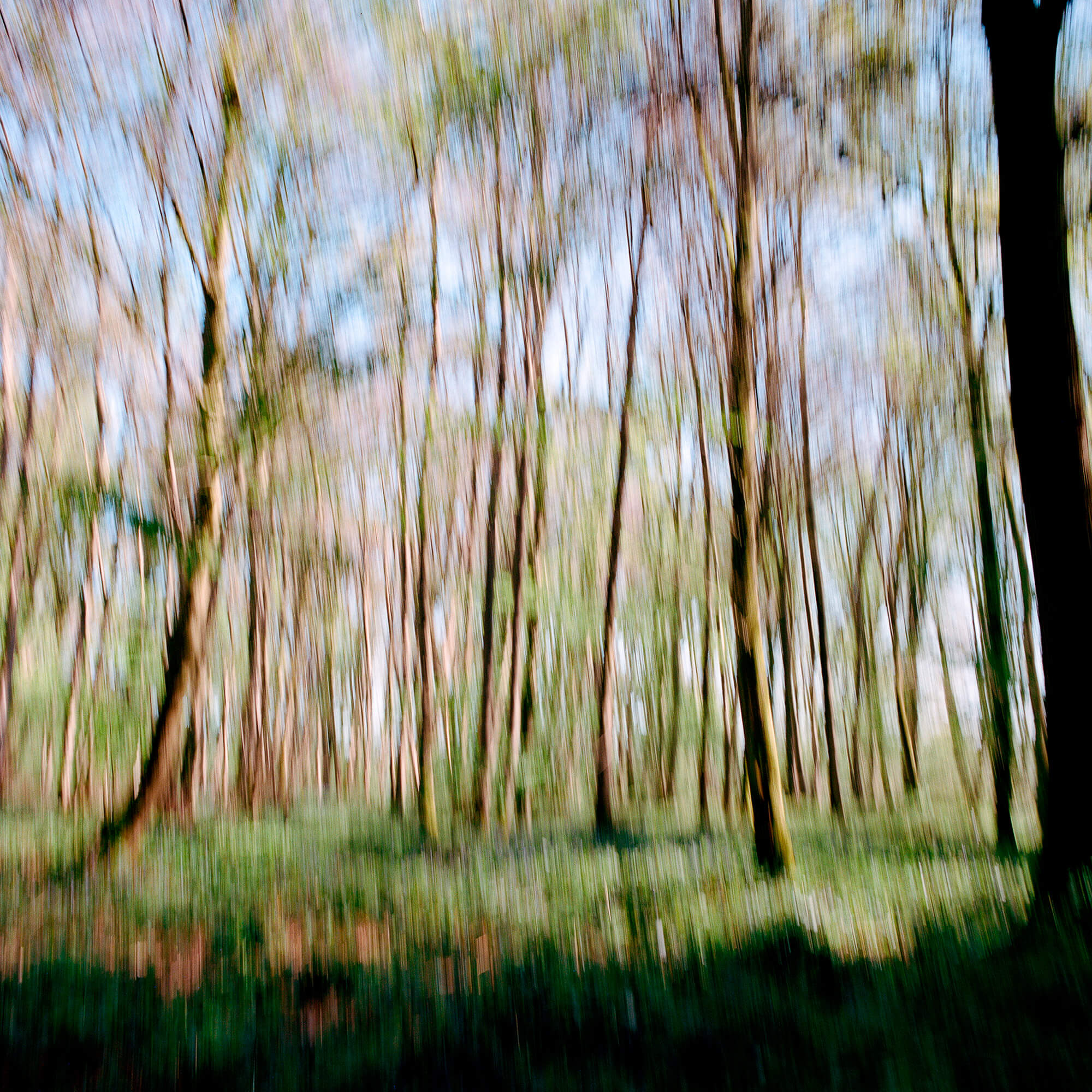 Luke Watson Victory for the Fallen blurred trees the south west collective of photgraphy ltd
