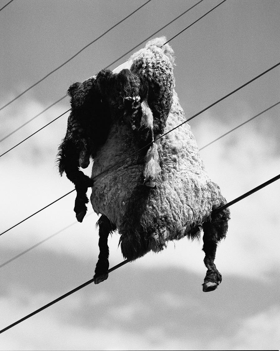 Taiyo Onorato & Nico Krebs sheep skin on power line