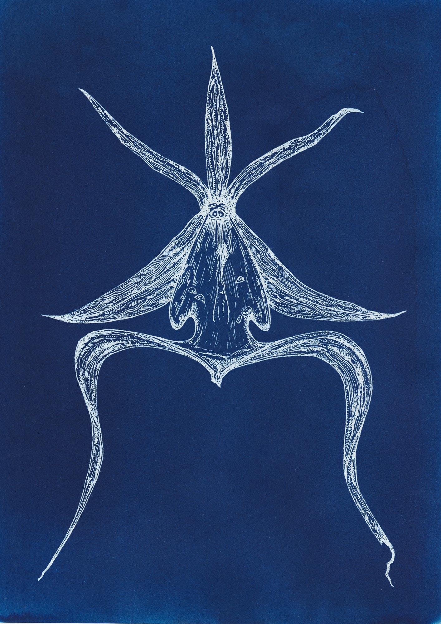 Amy Pezzin Garden of Extinction blue cyanotype images