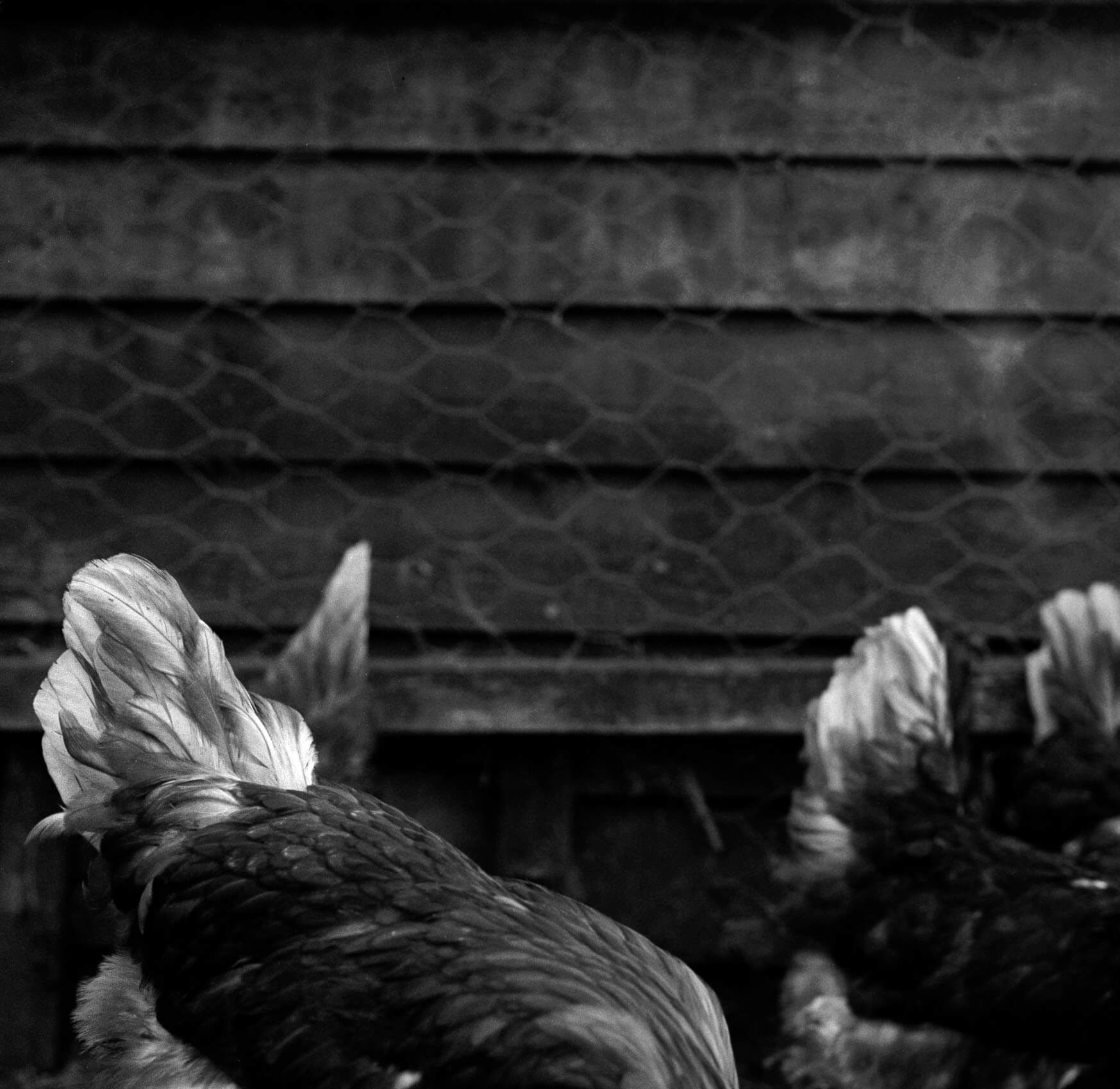 Jess Keatley the south west collective of photography ltd chicken tails