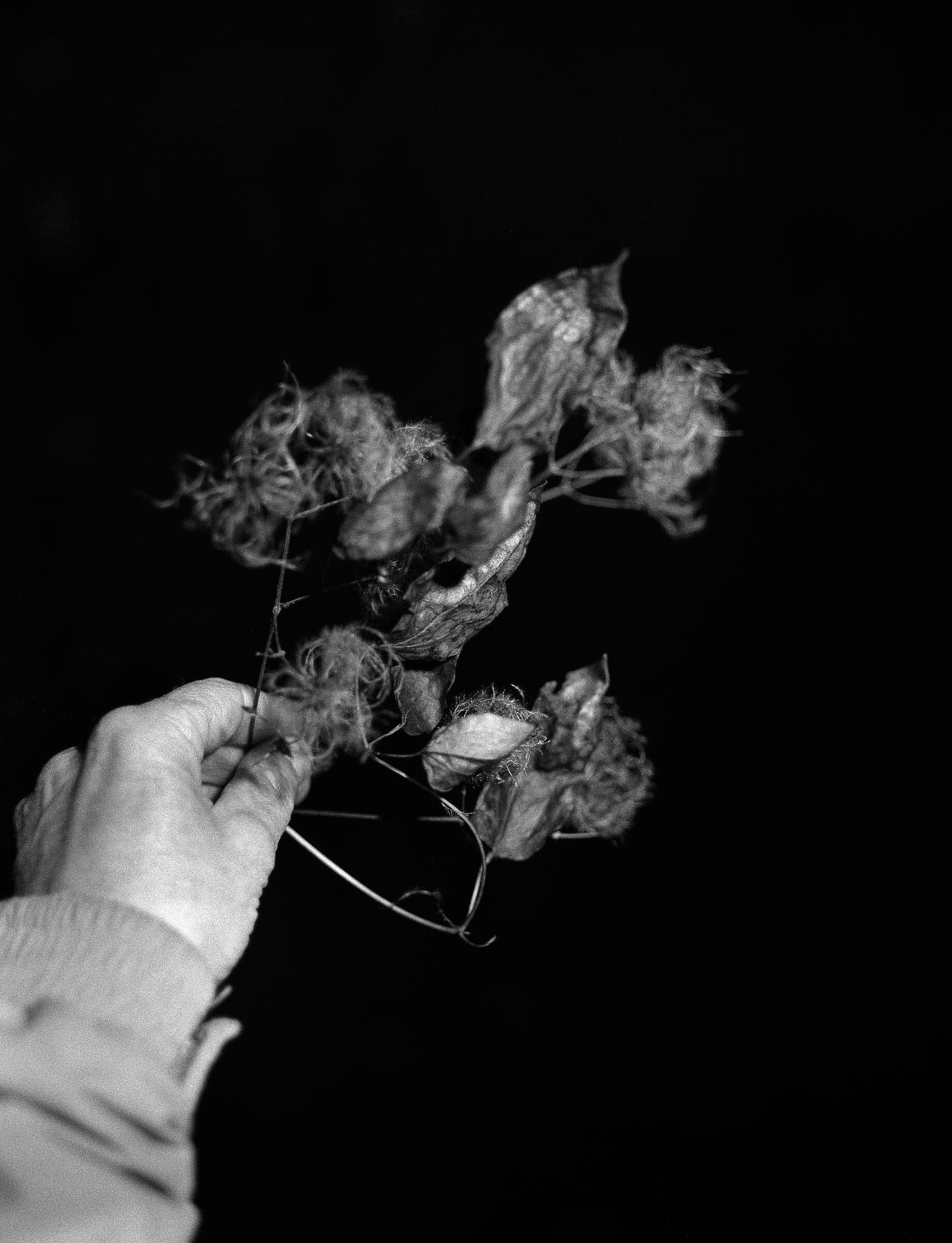 Rosie Dale - Runaways women holding plants in her hands