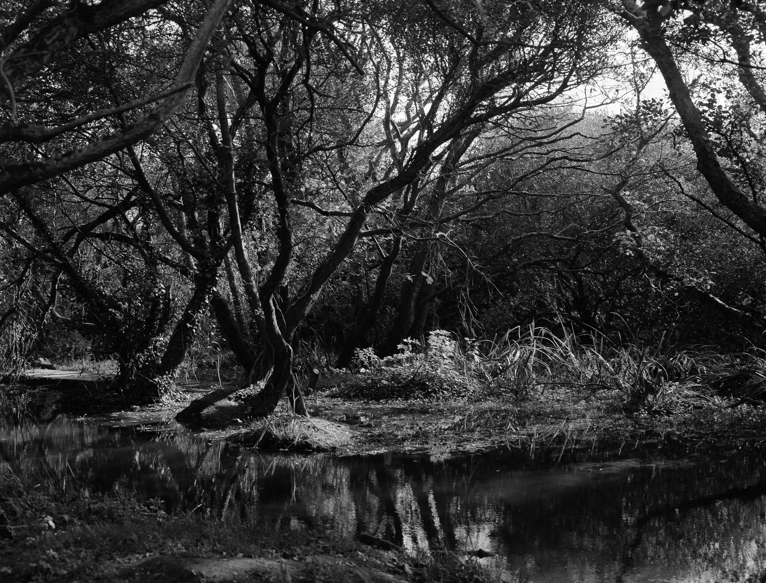 Rosie Dale - Runaways black and white garden the south west collective