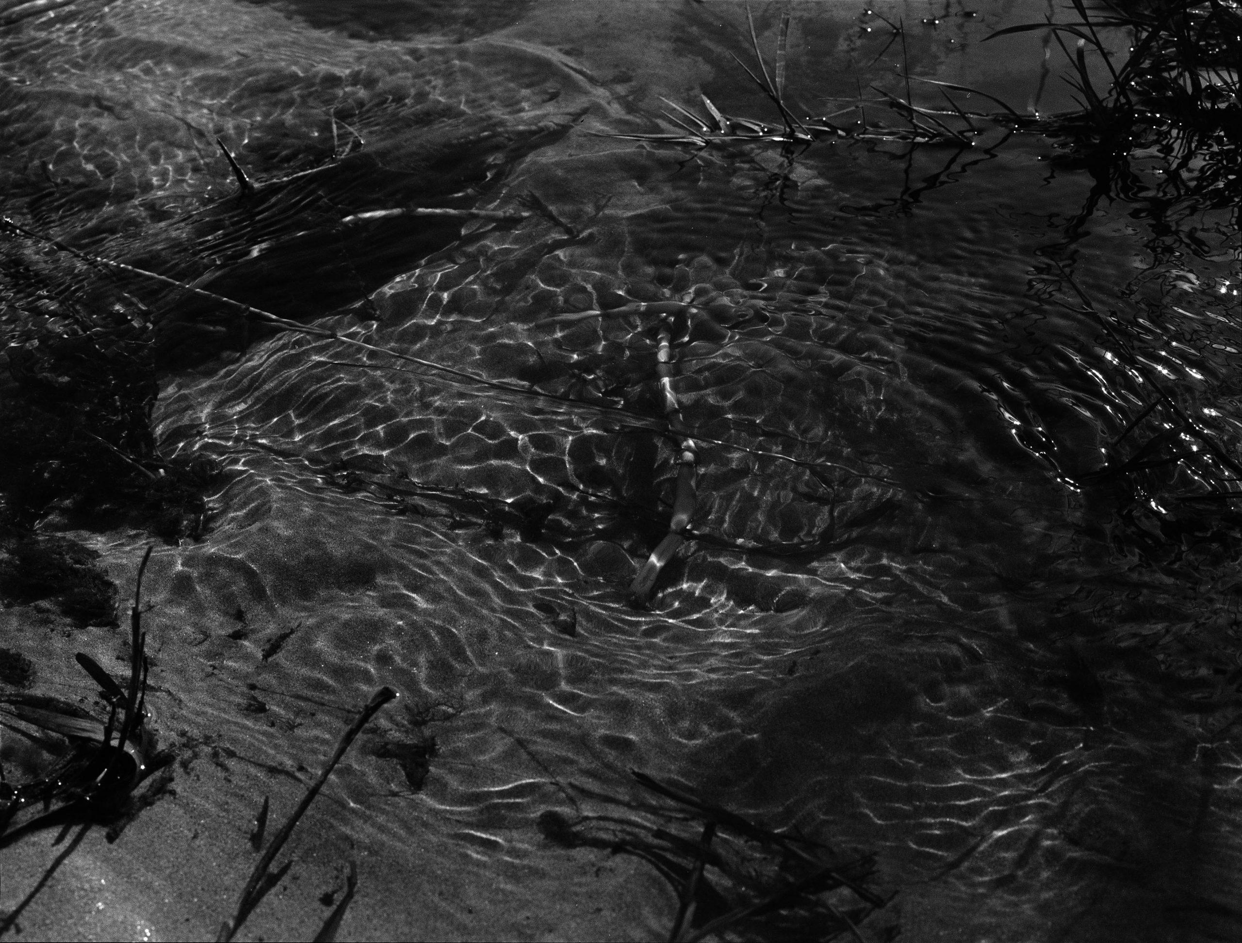 Rosie Dale - Runaways black and white greenery