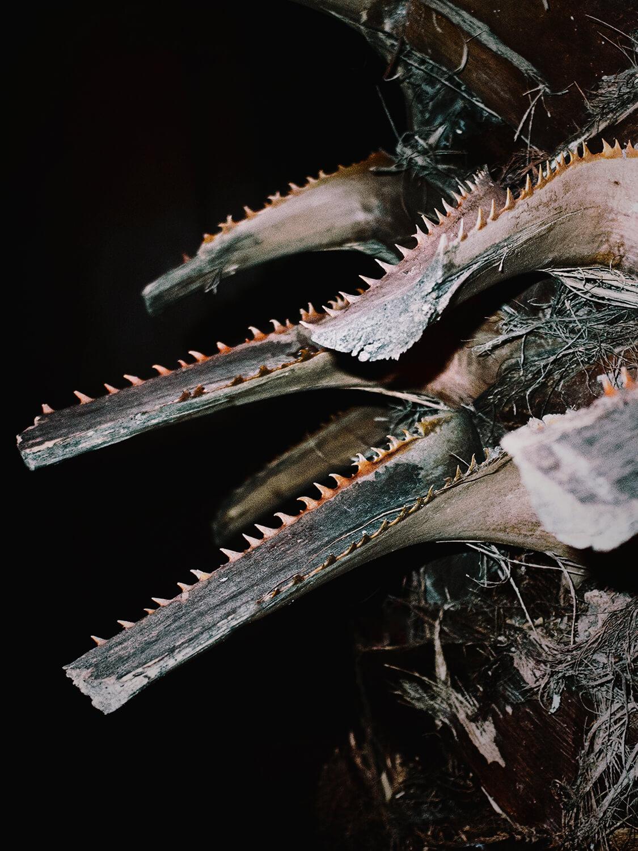 Anargyros Drolapas – Lernaean Hydra the south west collective of photography extinct prehistoric fish with sharp teeth