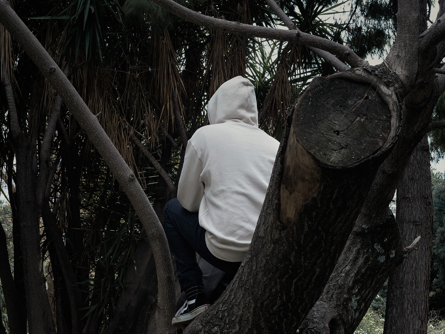 Anargyros Drolapas – Lernaean Hydra the south west collective of photography man in white jumper sat in a tree