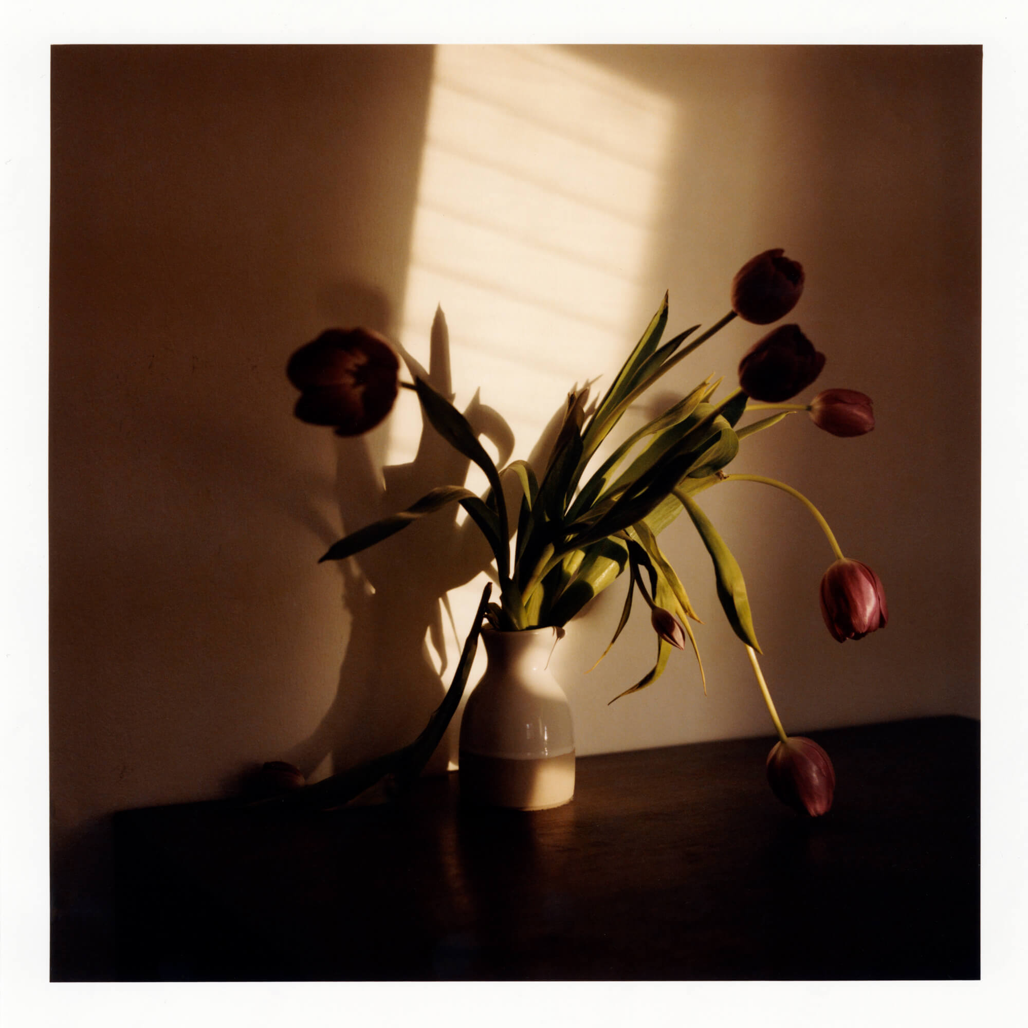 Phoebe Somerfield - Grapefruit Boulevard the south west collective of photography still life photo of a plant pot in low light