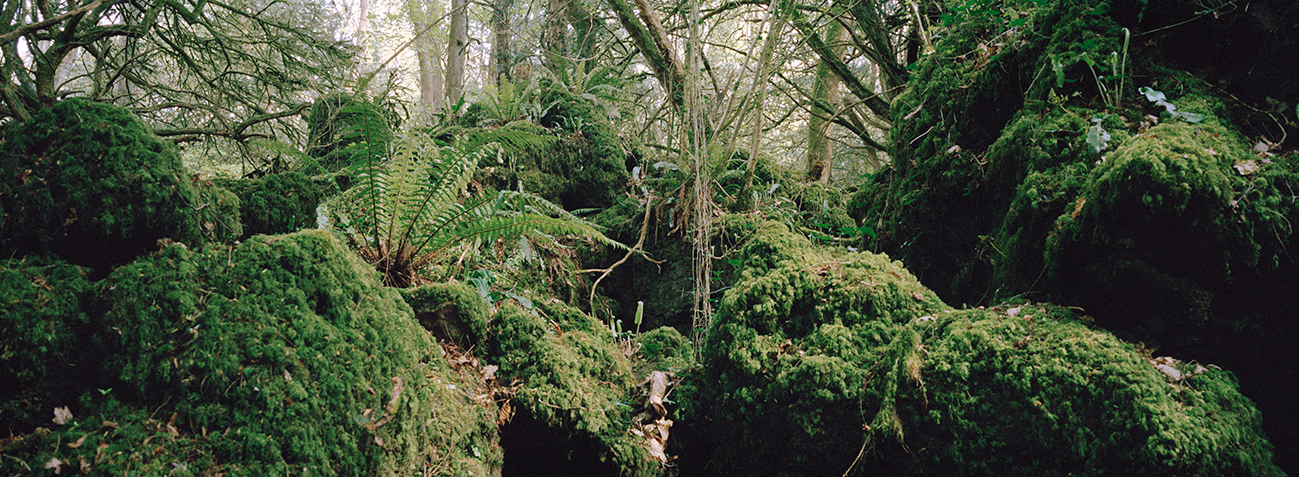 Philippa Klaiber - Vorest the south west collective of photography green forest