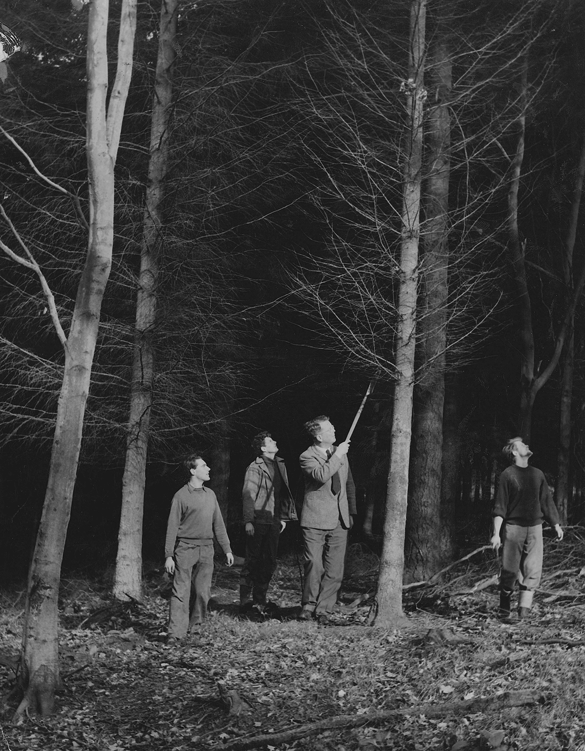 Philippa Klaiber - Vorest the south west collective of photography people stood looking at tree