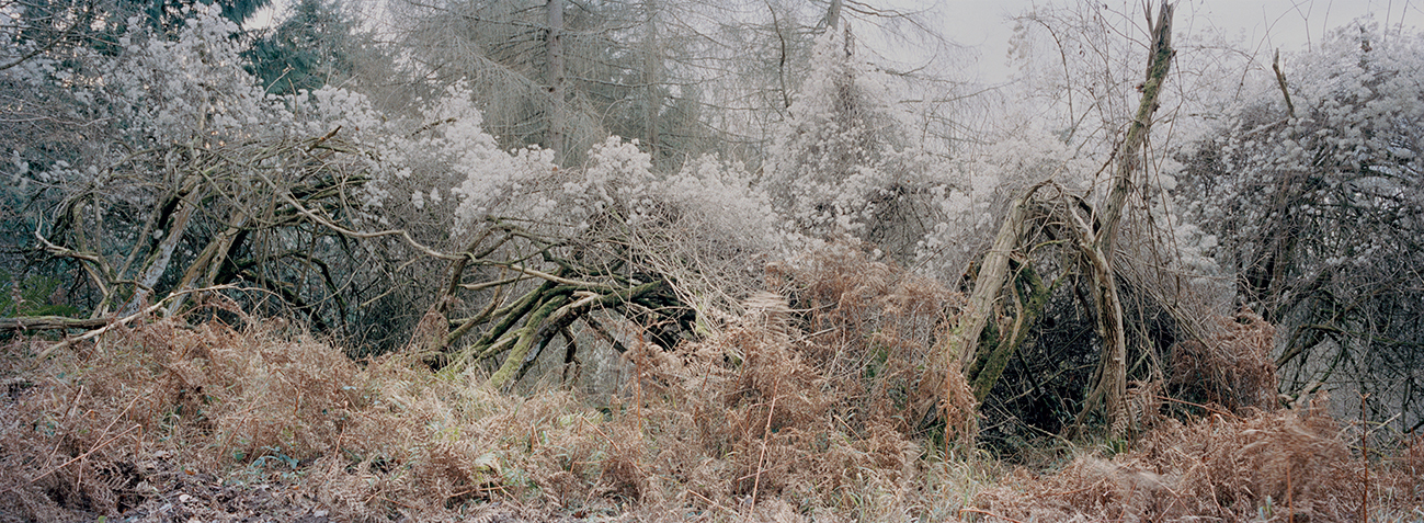 Philippa Klaiber - Vorest the south west collective of photography woodland