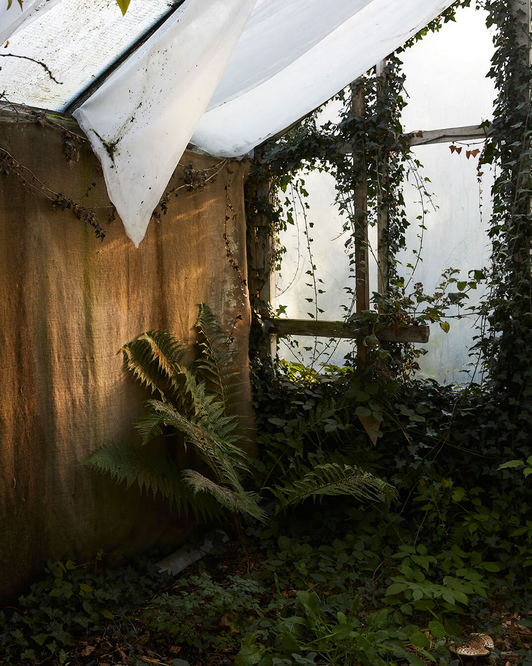 Elliot Cole - A Hull to Hold the Waves at Bay the south west collective of photography indoor overgrown greenhouse