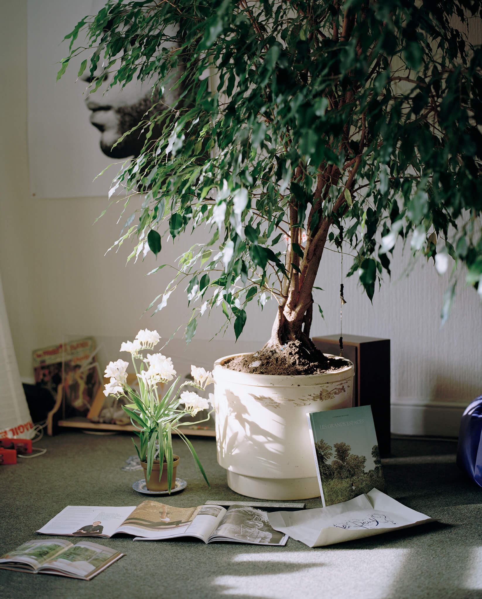 Elliot Cole - A Hull to Hold the Waves at Bay the south west collective of photography beautiful indoor tree