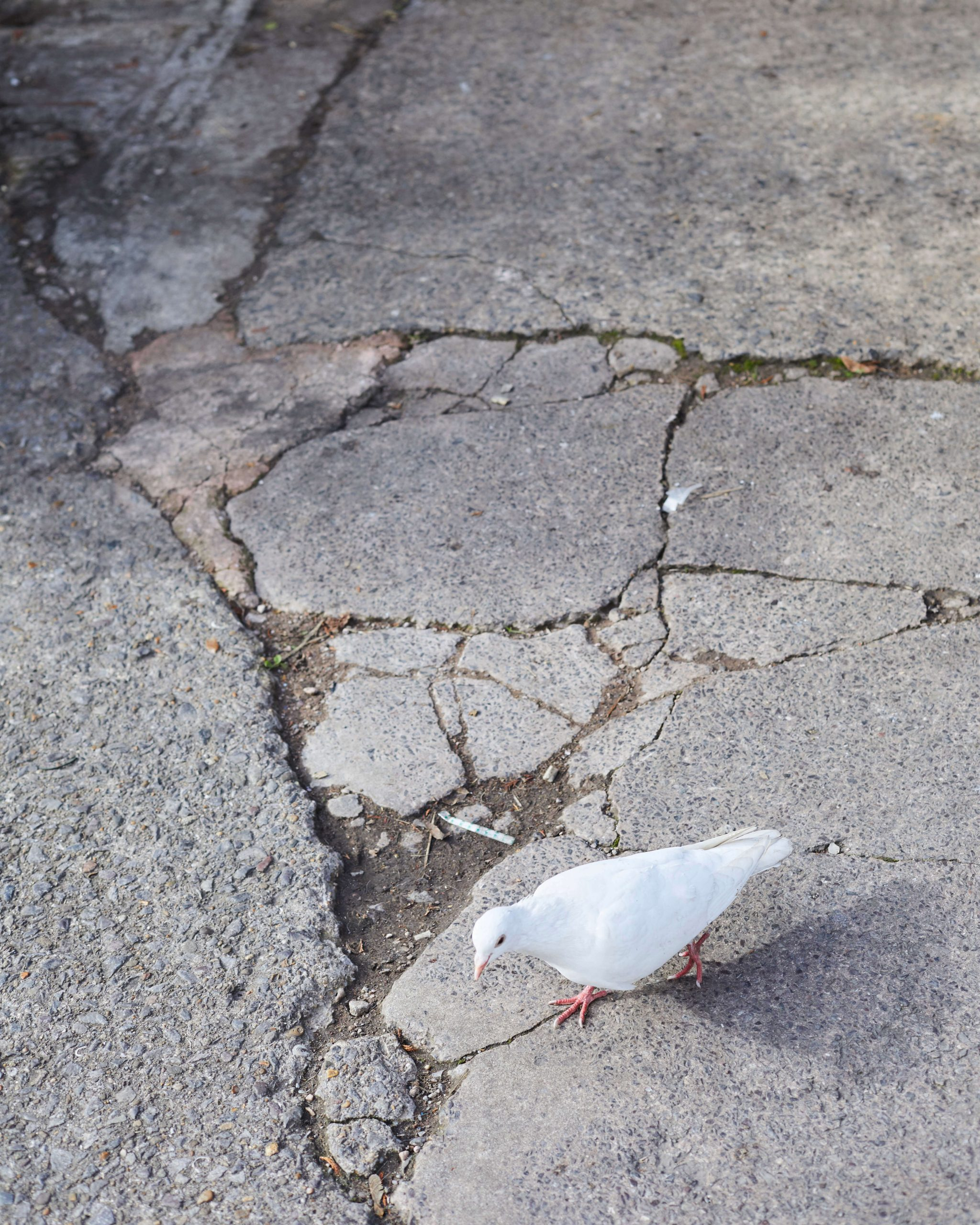 Elliot Cole - A Hull to Hold the Waves at Bay the south west collective of photography white dove walking on cracked pavement