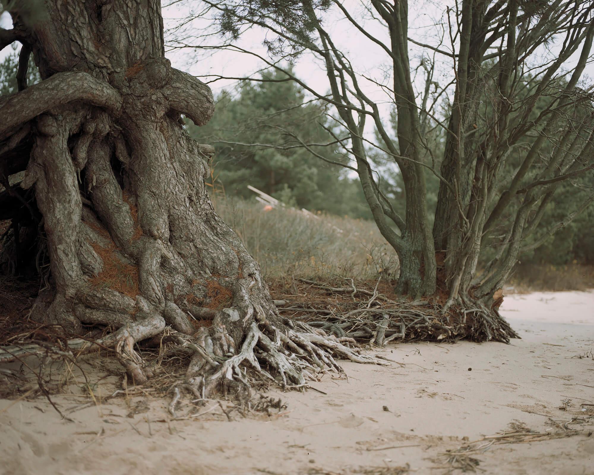 Tadas Kazakevicius - Between Two Shores trees