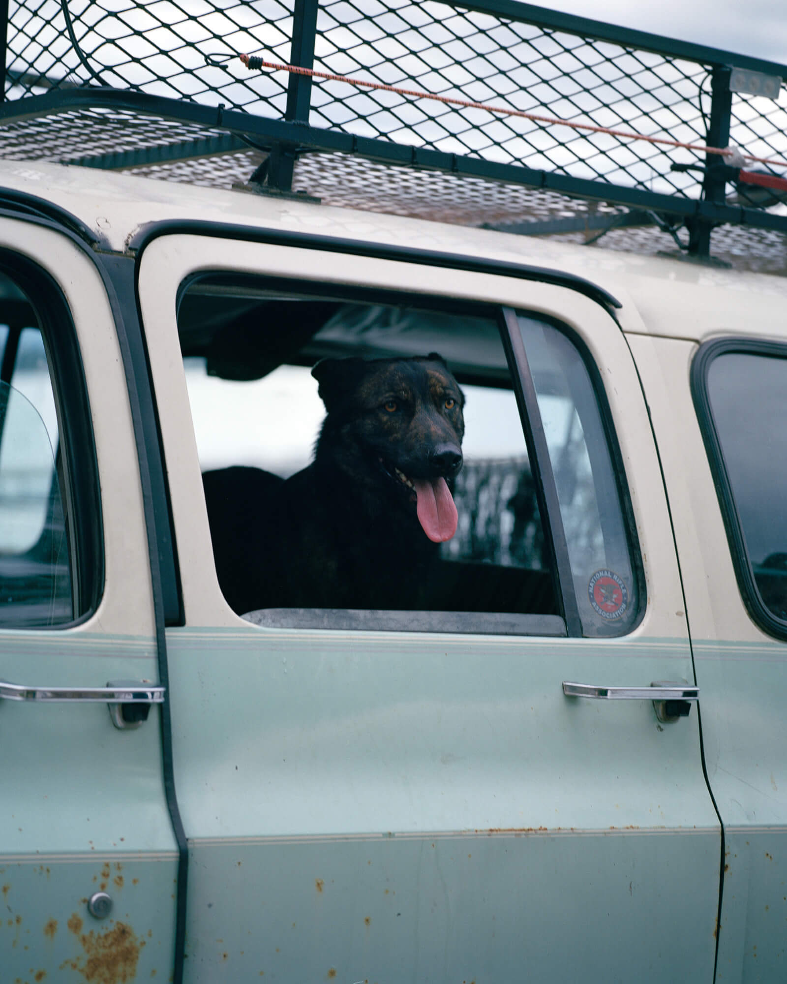 Caroline Tompkins Fantasy Body the south west collective of photography ltd dog out of car window