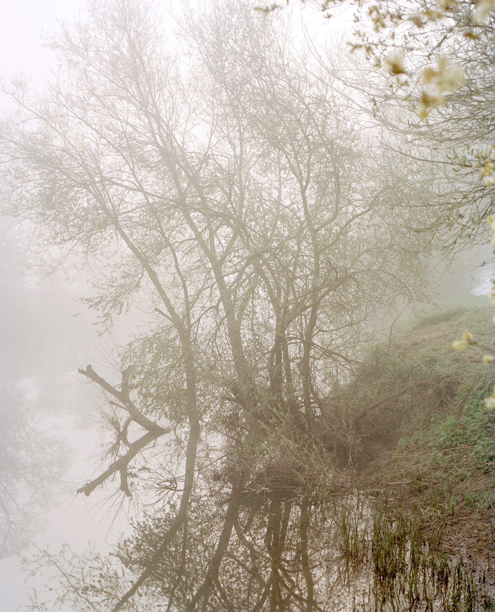 Elliot Cole - A Hull to Hold the Waves at Bay the south west collective of photography misty woodland