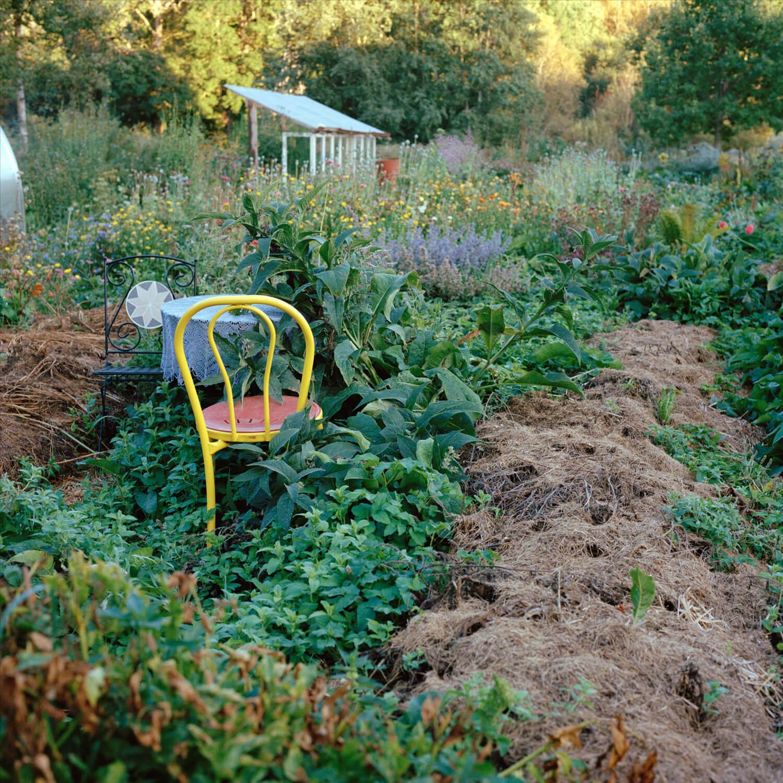Kadri Otsiver - Ta aed on tema nägu (Her garden has her face) yellow chair within green overgrown plants