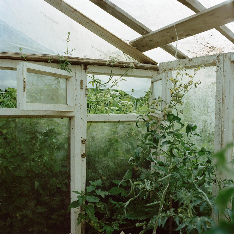 xKadri Otsiver - Ta aed on tema nägu (Her garden has her face) Greenhouse interior overgrown