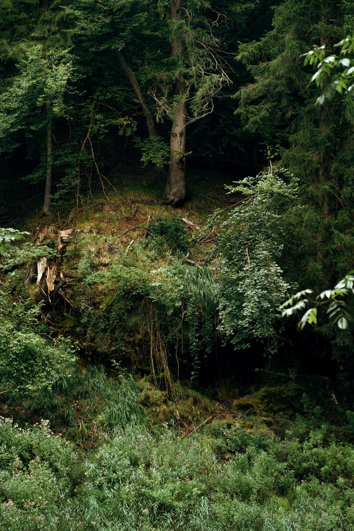 Nadja Ellinger - Path of Pins woodland landscape