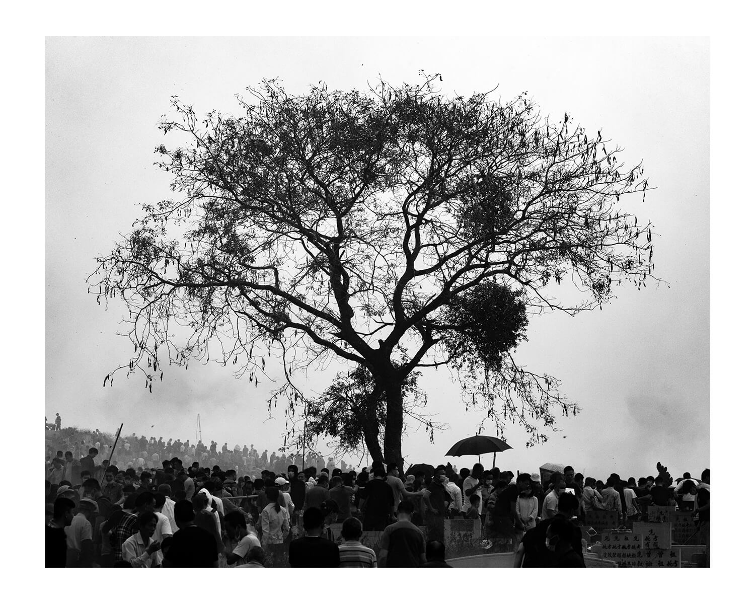 Tony Mak - To The West Of The Solitary Sea. Giant tree above crowds of people