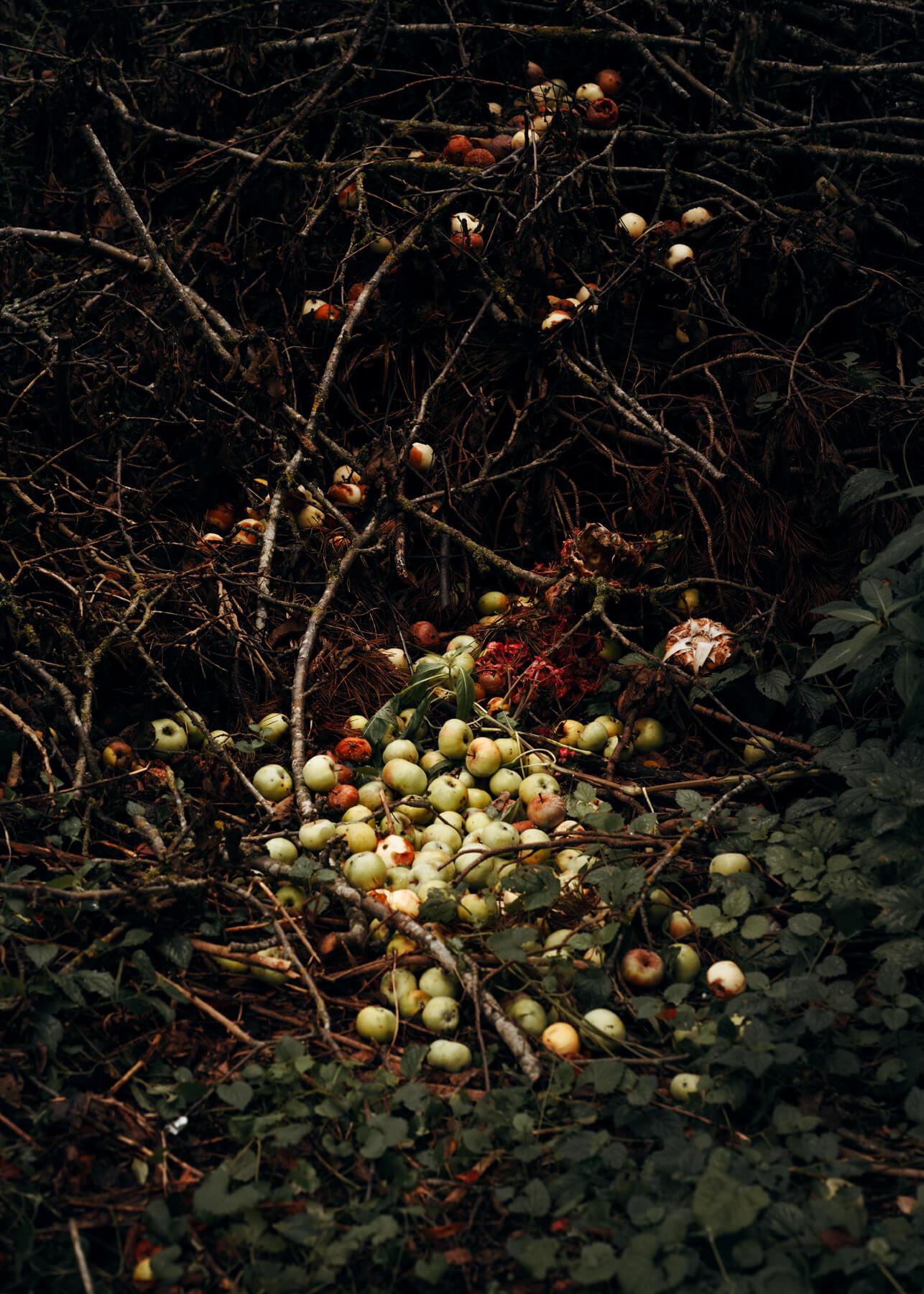 Nadja Ellinger - Path of Pins apples at base of tree